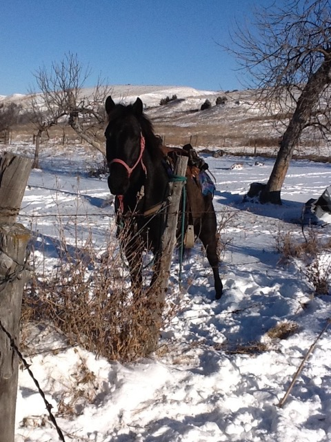 Healing Hearts at Wounded Knee Rider Sponsors