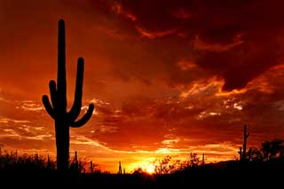 Tucon-Saguaro_Sunset